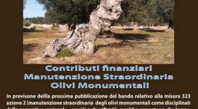 Contributi finanziari manutenzione straordinaria olivi monumentali